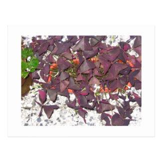 Carte de fleurs