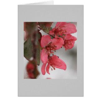 Carte de fleurs de pomme sauvage