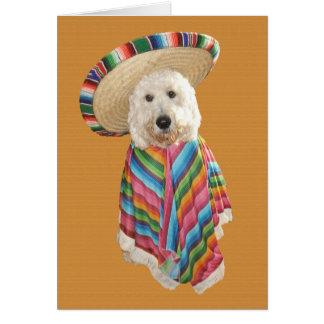 Carte de Goldendoodle Cinco De Mayo