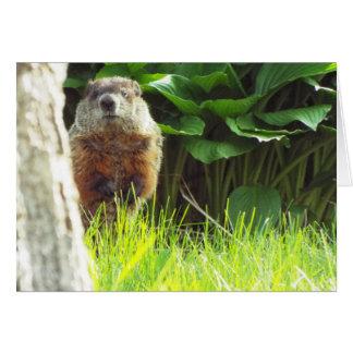 Carte de Groundhog