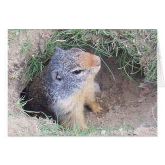 Carte de jour de Groundhogs
