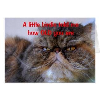 Carte de Kitty de Persan de calicot d'humour