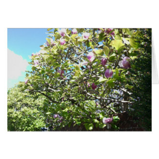 Carte de magnolia