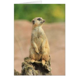 carte de meerkat