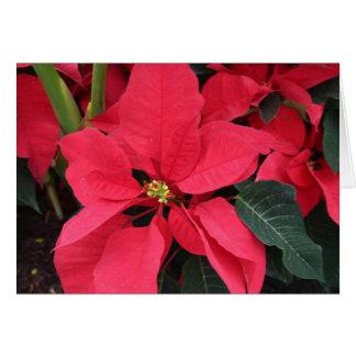 Carte de Noël avec la poinsettia rouge lumineuse