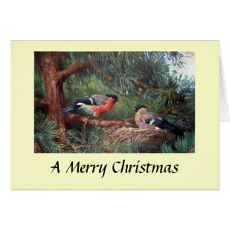 Carte de Noël - bouvreuils