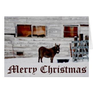Carte de Noël d'âne