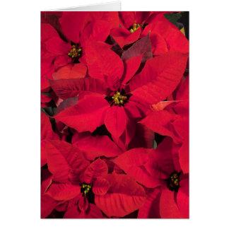Carte de Noël de poinsettia