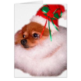 Carte de Noël de Pomeranian Père Noël