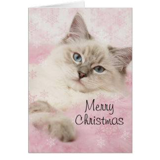 Carte de Noël de Ragdoll