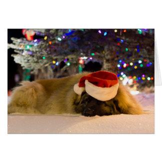 Carte de Noël de sommeil Leonberger