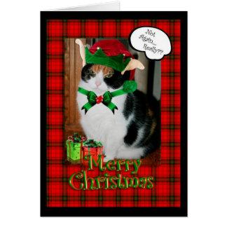 Carte de Noël drôle, chat grincheux