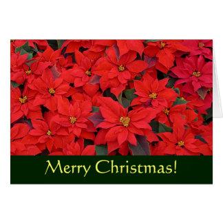 Carte Carte de Noël rouge de poinsettias (blanc à