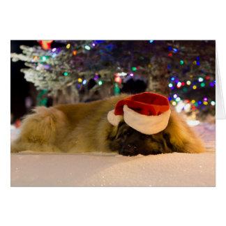 carte de Noël somnolente de Leonberger