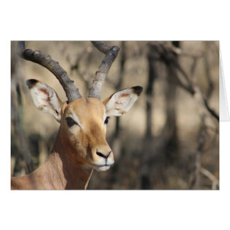 Carte de note africaine d'impala