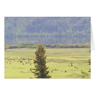 Carte de note de bétail de lac Canim