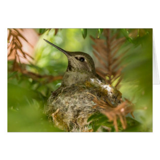 Carte de note de colibri d'emboîtement