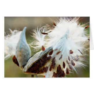 Carte de note de Milkweed : Complètement des