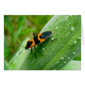 Carte de note d'insecte de Milkweed