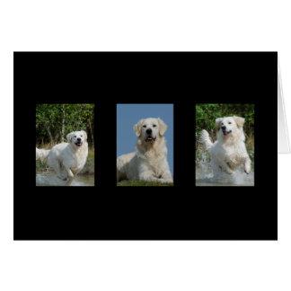 Carte de note faite sur commande de blanc de chien