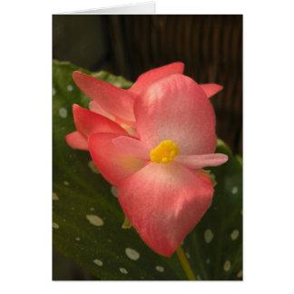 Carte de note rose de bégonia d'Angelwing