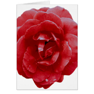 Carte de note - rose rouge rouge