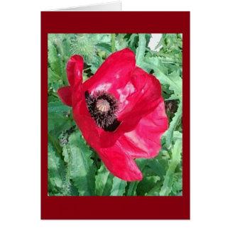Carte de note rouge de pavot