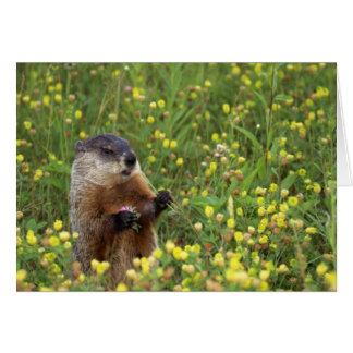 Carte de pose de Groundhog