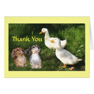 Carte de remerciements de teckels avec des canards