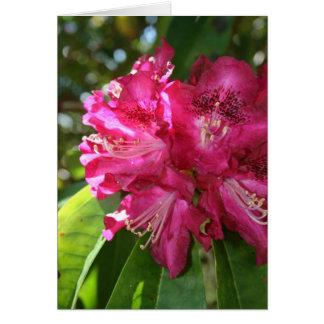 Carte de rhododendrons