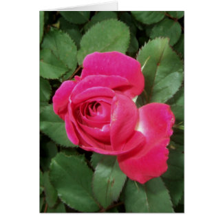 CARTE ~ DE ROSE ROUGE