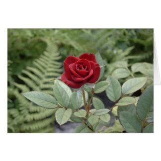 Carte de soin de rose rouge de rapport d'amitié