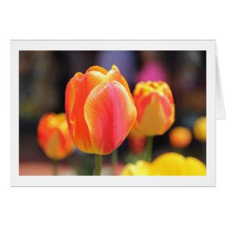 Carte de tulipe