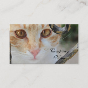 Carte De Visite Chat Tigre Orange