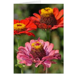 Carte de voeux colorée de fleur de zinnia