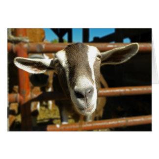 Carte de voeux curieuse de chèvre