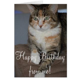 Carte de voeux d'anniversaire de chat de regarder