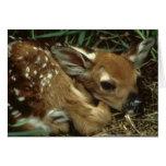 Carte de voeux de cerfs communs de bébé
