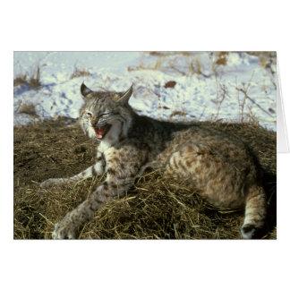 Carte de voeux de chat sauvage