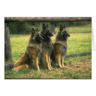 Carte de voeux de chiens de berger allemand