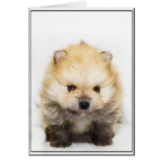 Carte de voeux de chiot de Pomeranian