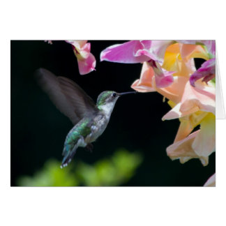 carte de voeux de colibri