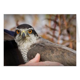 Carte de voeux de faucon pérégrin