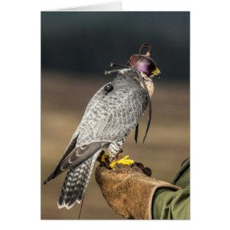 Carte de voeux de fauconnerie