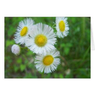 Carte de voeux de fleurs blanches - ayez un beau