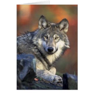 Carte de voeux de loup
