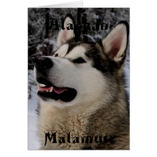Carte de voeux de Malamute d'Alaska