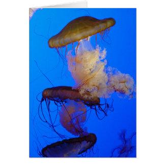 Carte de voeux de méduses