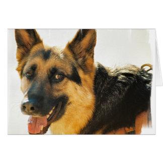 Carte de voeux de photo de chien de berger