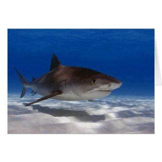 Carte de voeux de requin de tigre